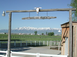 Bar~On Ranch - Home of Skippoleon - 1999 Buckskin Stallion